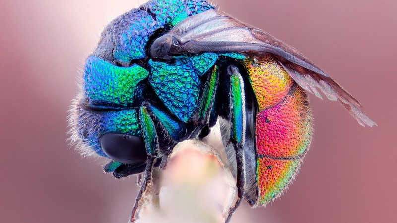 fly, wings, pink, incests (horizontal)