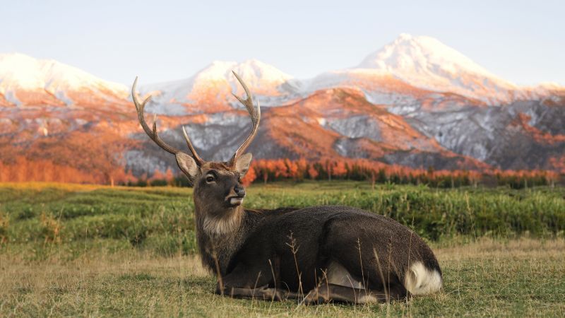 Deer, New Zeland, mountains (horizontal)