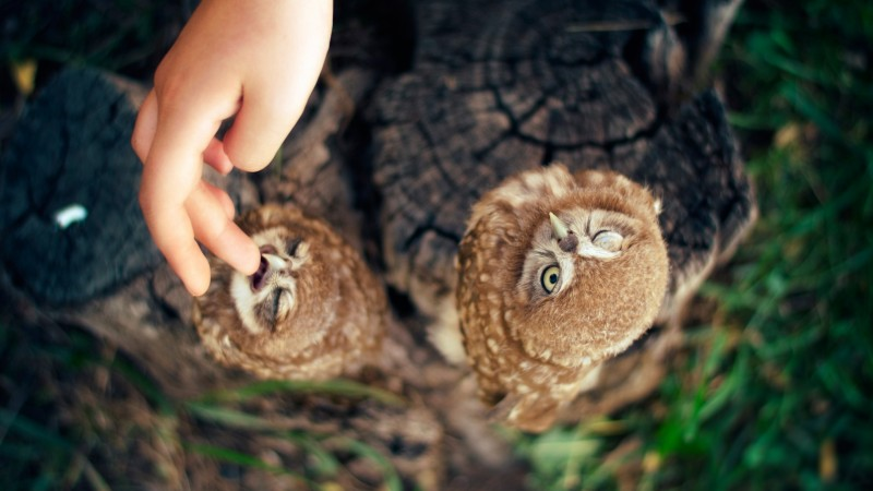 Owl, Ann and Hayk Owls, Armenia, cute, hand (horizontal)