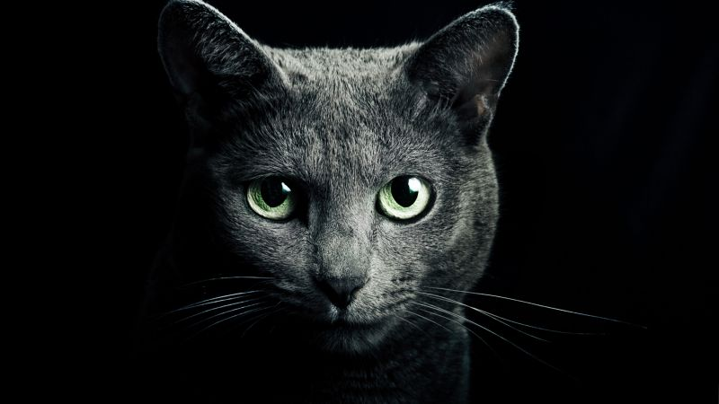 Kitty, kitten, cat, eyes, cute, black (horizontal)