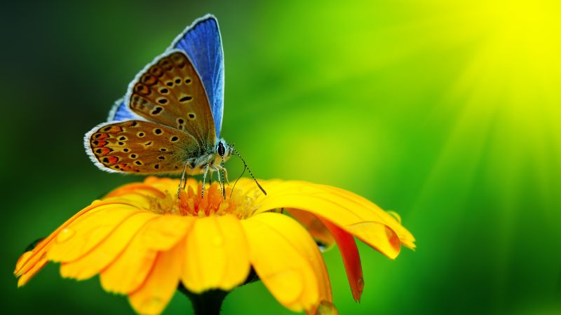 Butterfly, insects, flowers, Glass, nature, garden (horizontal)