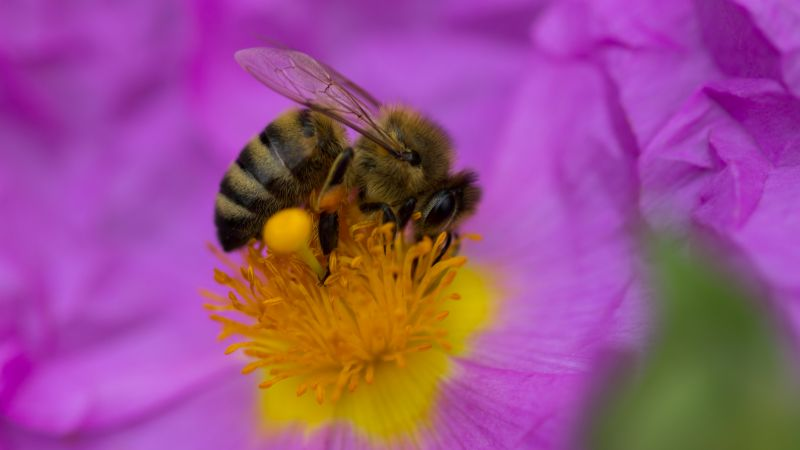 bee, purple, flower, yellow, insects (horizontal)