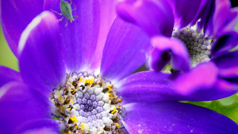 bee, purple, flower, yellow, insects