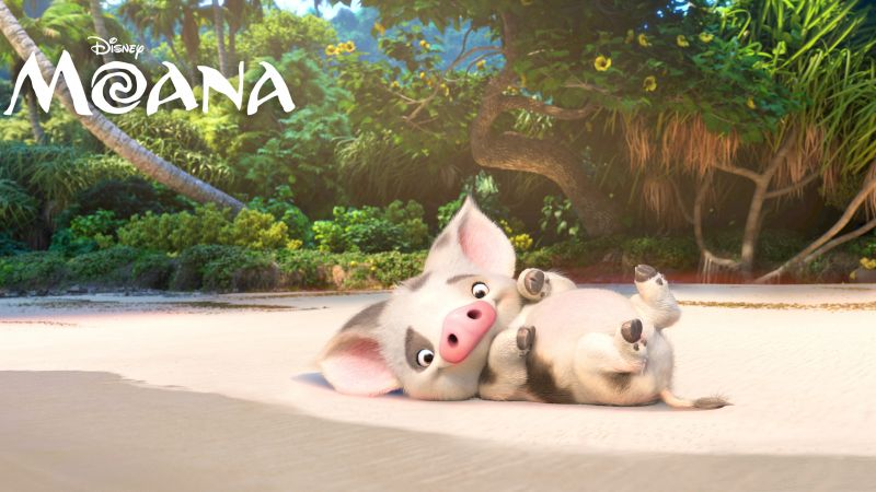 Moana, pugo, piggy, best animation movies of 2016 (horizontal)