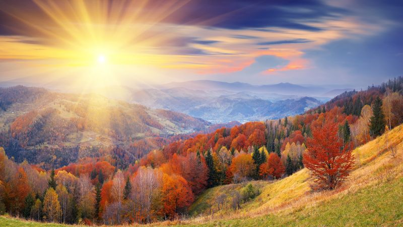 autumn, trees, dawn, mount, coloring