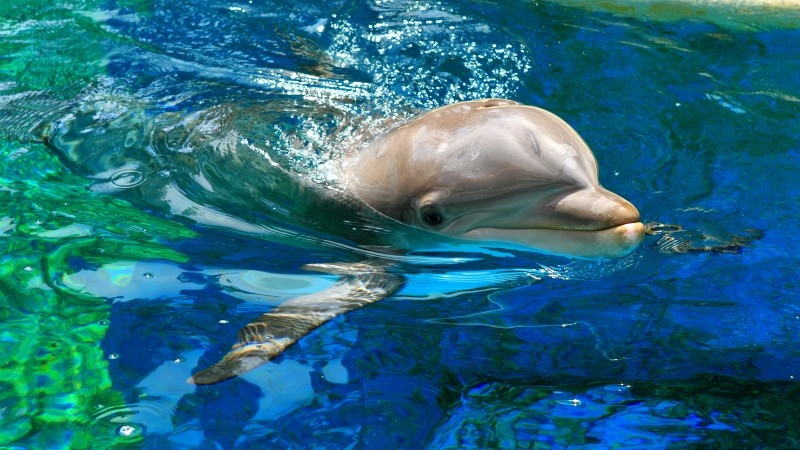 Dolphin, Yerevan Dolphinarium, Armenia, Waves, Water, pool, tourism, diving, blue (horizontal)