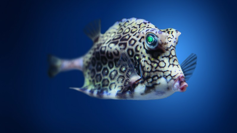 Boxfish, cowfish, Atlantic, Indian, Pacific, ocean, underwater, fish, blue water, diving, tourism, World's best diving sites (horizontal)