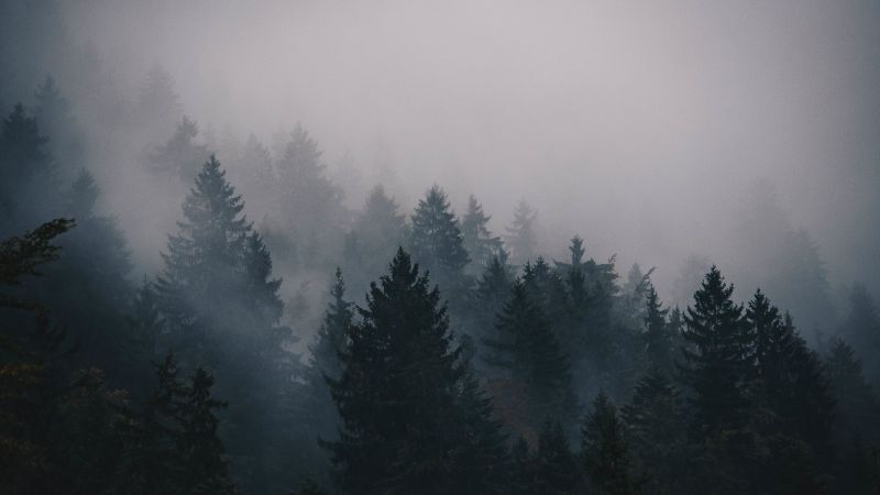fog, 5k, 4k wallpaper, trees, forest (horizontal)