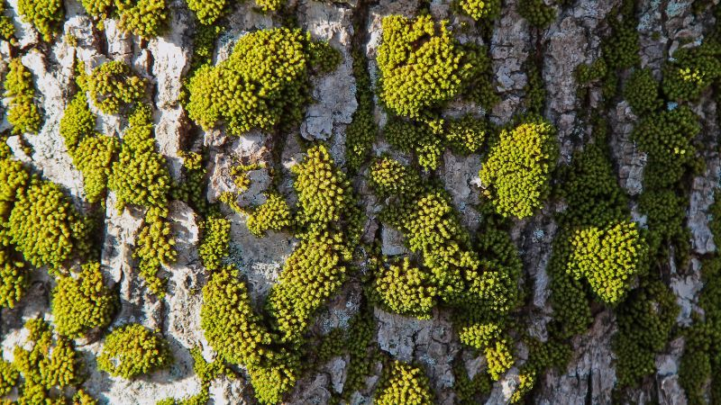 abstract, moss, tree