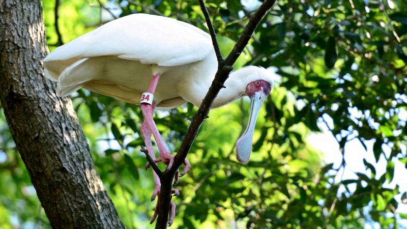 Bird, Dina's City, tourism, zoo, tree, green, white, nature