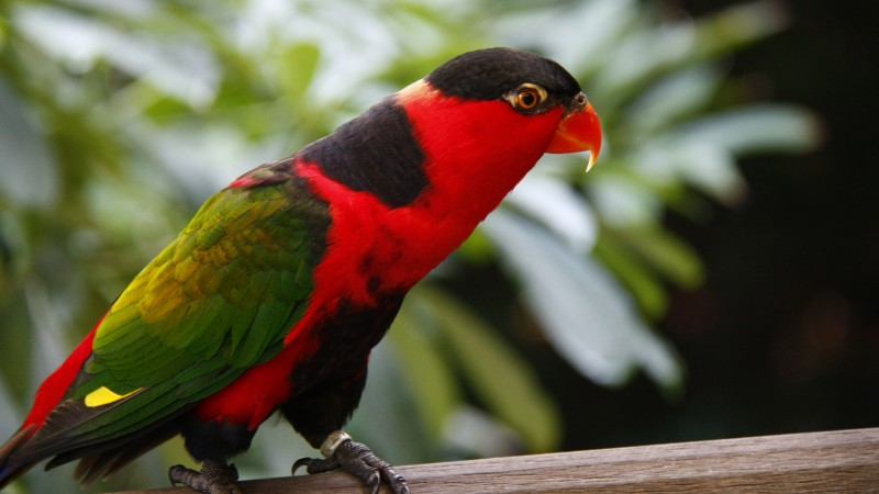 Parrot, Jurong Bird Park, tourism, bird, animal, nature, red, green