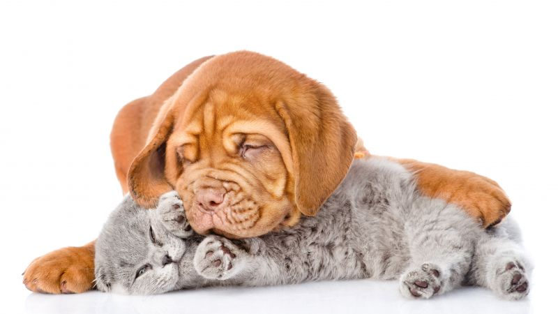 kitten, puppy, cute, 5k (horizontal)