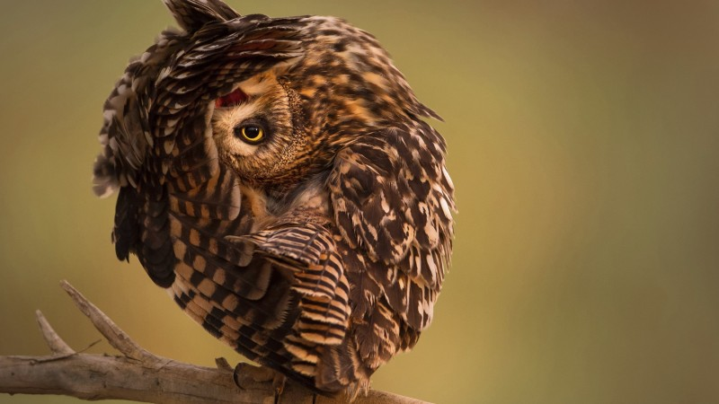 National Geographic, 4k, HD wallpaper, Owl, Funny (horizontal)