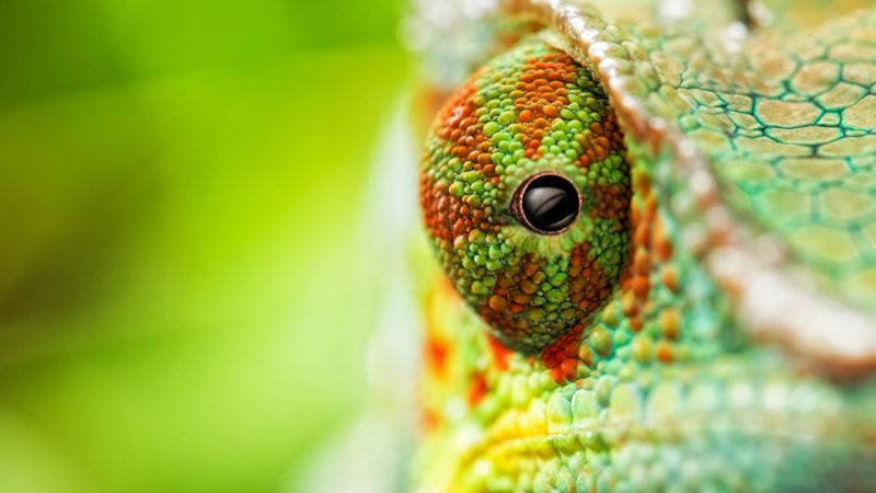 chameleon, eyes, 4k (horizontal)
