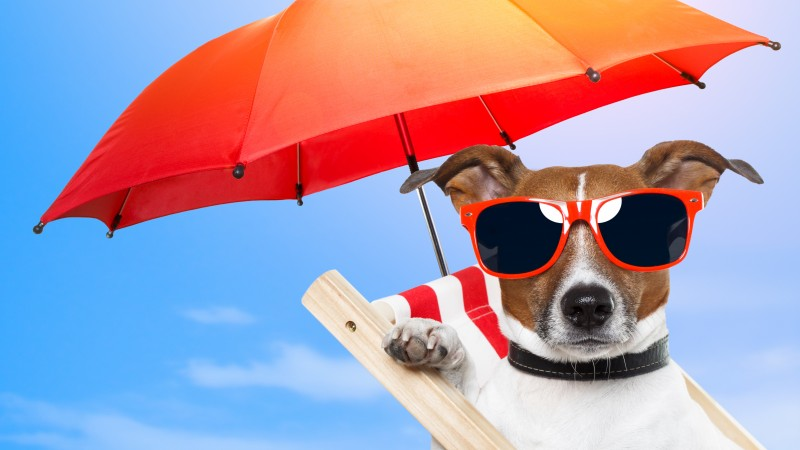 Dog, 5k, 4k wallpaper, 8k, puppy, sun, summer, beach, sunglasses, umbrella, vacation, animal, pet, sky (horizontal)
