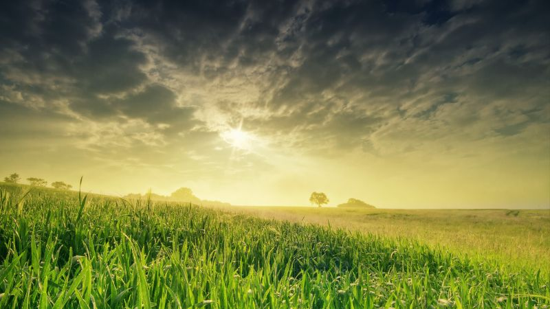 field, nature, sky, grass, 4k (horizontal)
