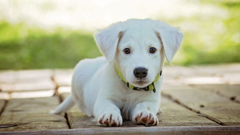 puppy, cute animals, 5k (horizontal)