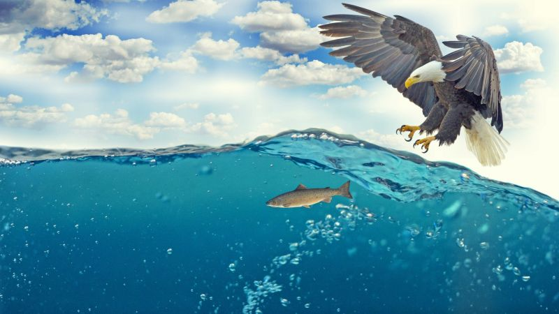 Fish, eagle, underwater, 4k (horizontal)