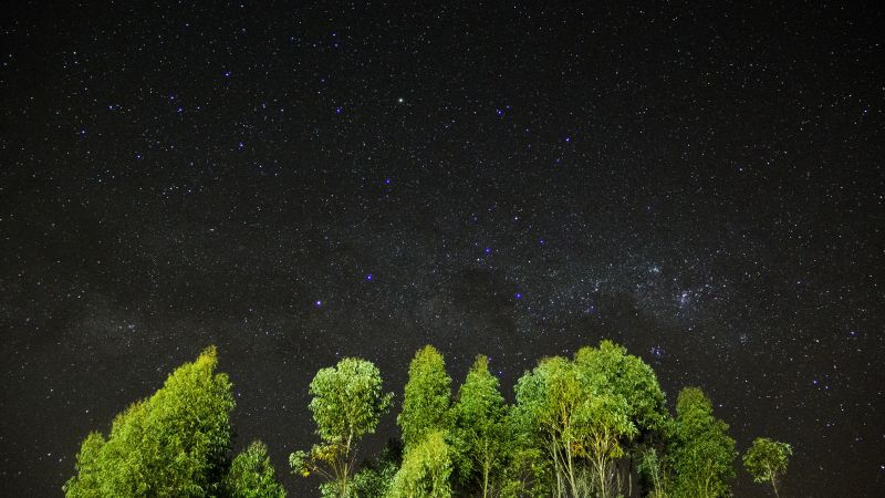 night, stars, sky, trees, 4k (horizontal)