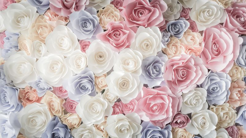 flowers, rose, 5k (horizontal)