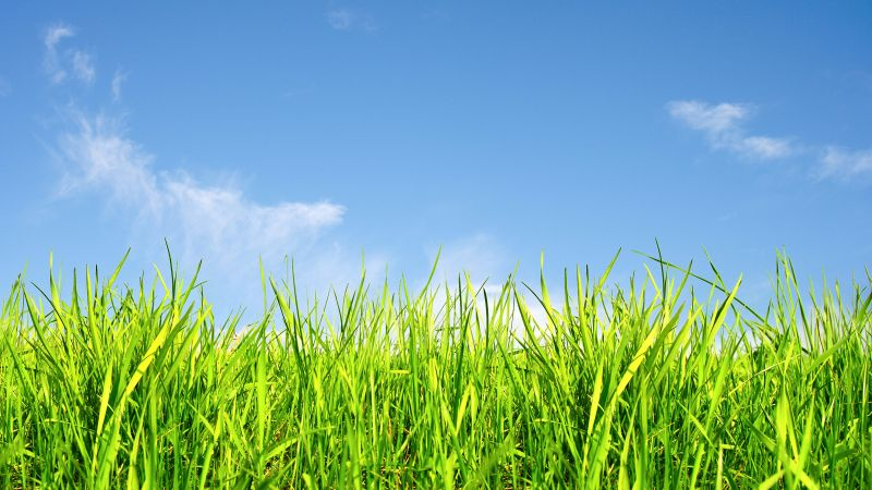 grass, sky, 5k (horizontal)
