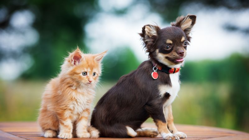 puppy, kitten, funny animals, 4k (horizontal)
