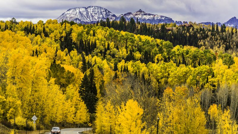 autumn, forest, trees, mountains, road, Colorado, USA, 5k (horizontal)
