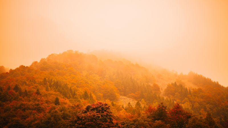 fog, autumn, forest, mountain, 5k (horizontal)