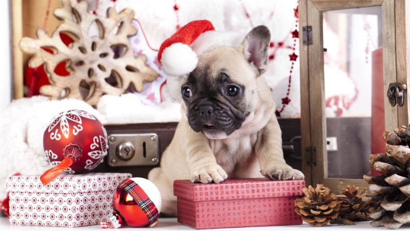 puppy, cute animals, Christmas, New Year, 4k (horizontal)