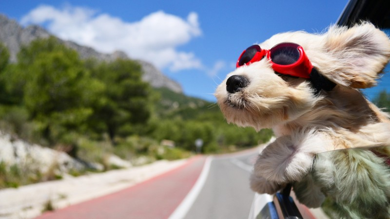 Dog, puppy, road, funny, glasses, hair, sky, nature