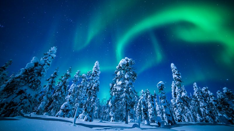 Lapland, Finland, winter, snow, tree, night, northern lights, 5k (horizontal)