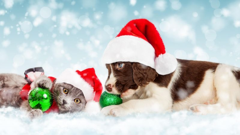 Christmas, New Year, snow, puppy, kitten, cute animals, 5k (horizontal)