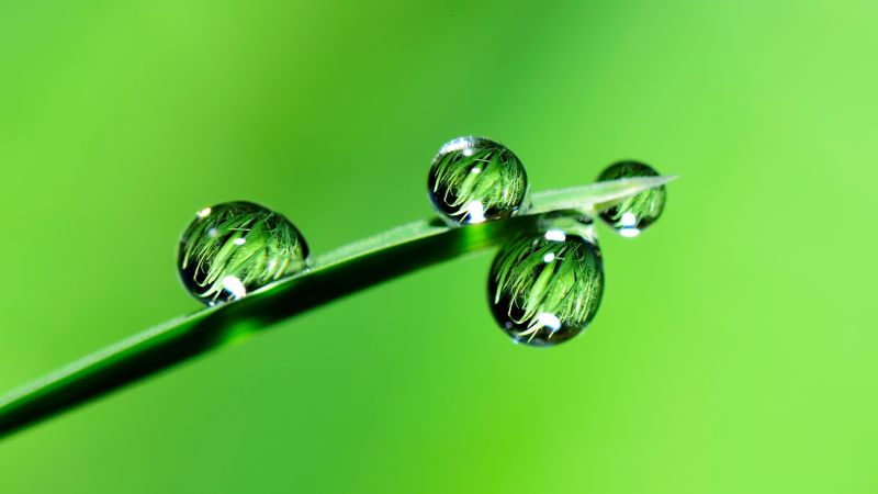 drops, grass, green, 4k (horizontal)