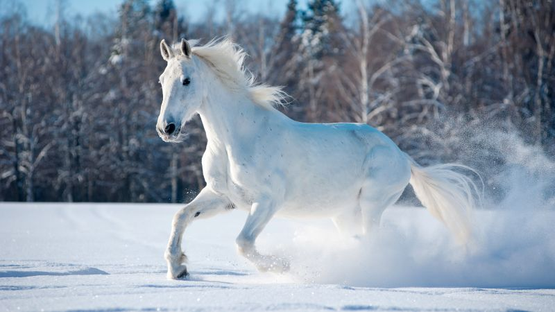 horse, cute animals, snow, winter, 5k (horizontal)