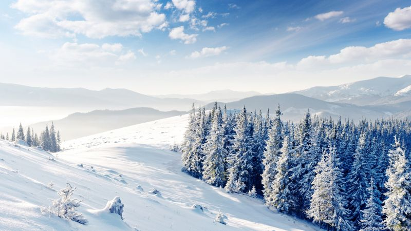 mountains, forest, trees, snow, winter, 4k (horizontal)