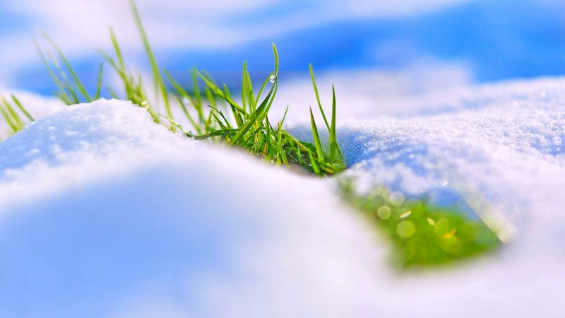 snow, winter, grass, 4k (horizontal)