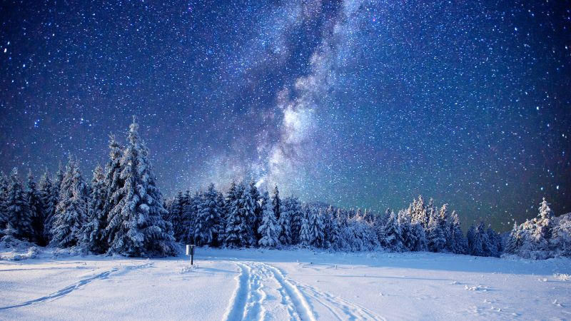 forest, snow, winter, sky, stars, night, 5k (horizontal)