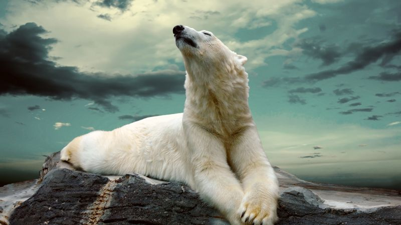 polar bear, cute animals, sky, clouds, 8k (horizontal)