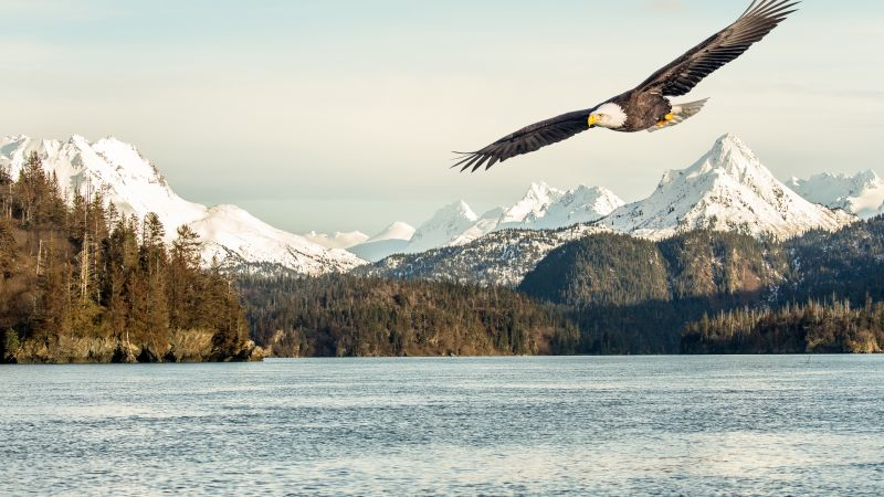 eagle, mountains, lake, 5k (horizontal)