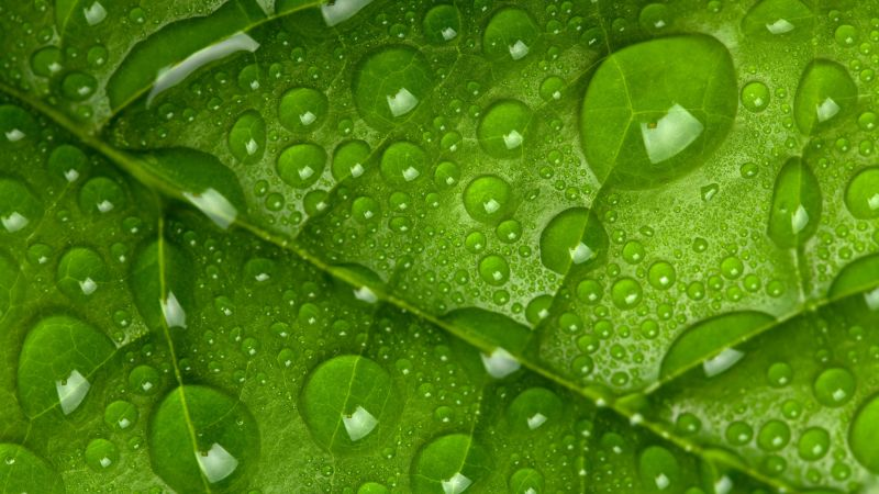 leaf, drops, green, 4k (horizontal)