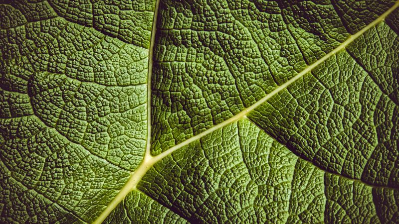 leaf, green, 5K (horizontal)