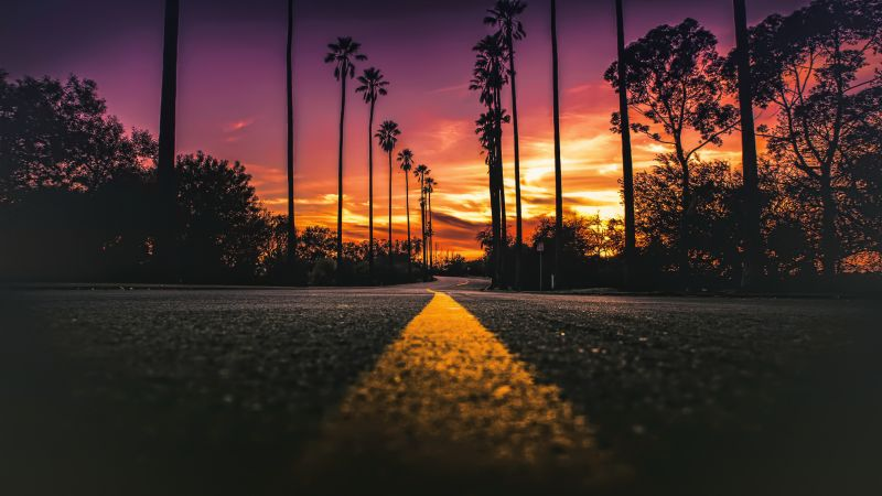 Los Angeles, California, road, palms, sunset, 4K (horizontal)