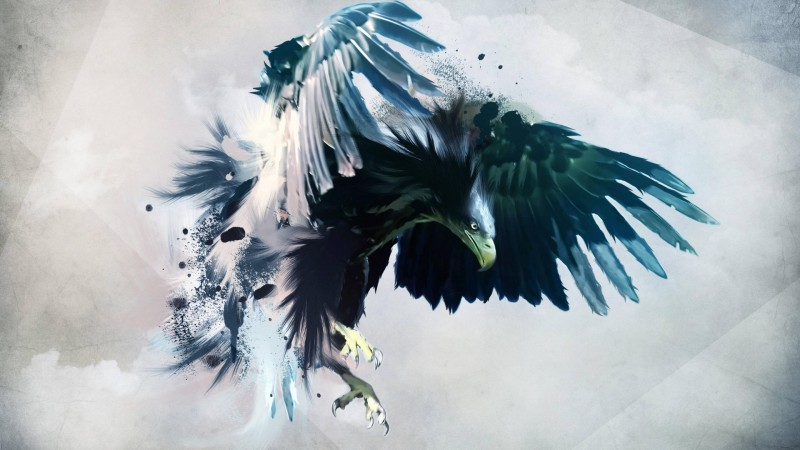 eagle, flight, draft (horizontal)
