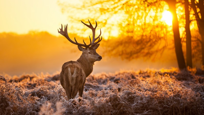 Deer, 4k, HD wallpaper, wild, sun, yellow, nature, winter