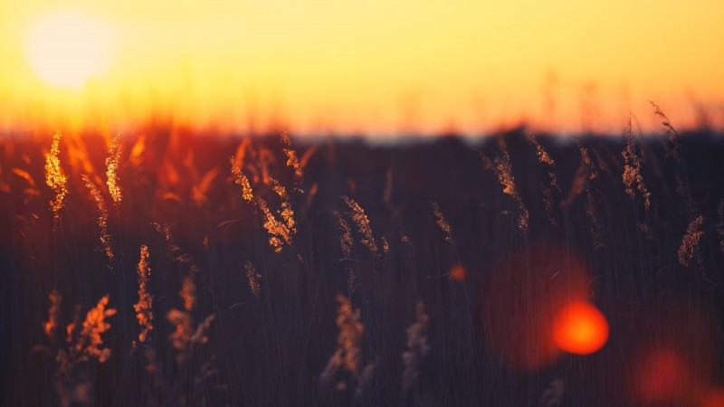 Field, sunset, grass