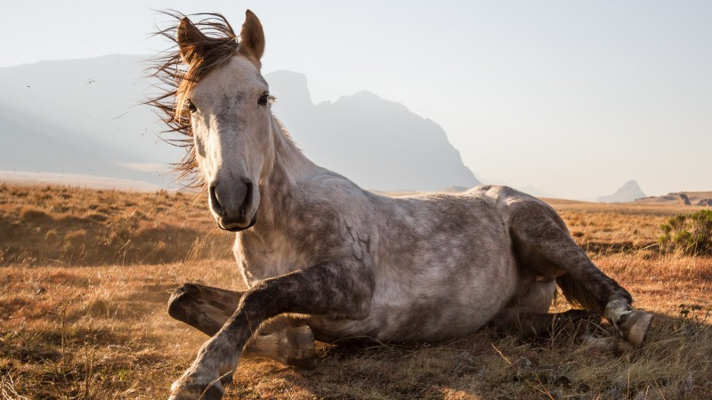 Horse, Africa, National Geographics (horizontal)
