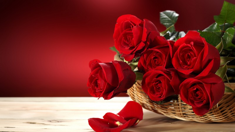Roses, 5k, 4k wallpaper, Flower bouquet, red (horizontal)