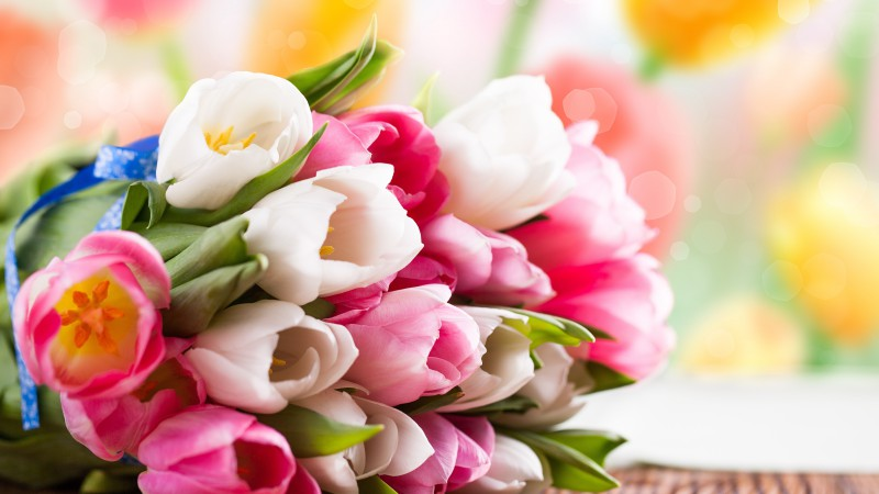 Tulip, flower bouquet, flowers, colorful (horizontal)