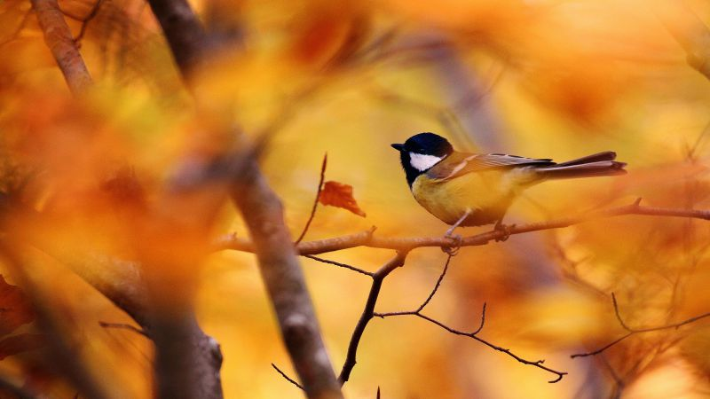 Tit, autumn, tree, blur (horizontal)