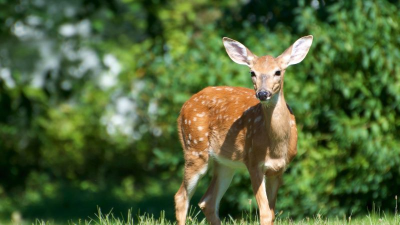 Deer, cute animals, funny, nature